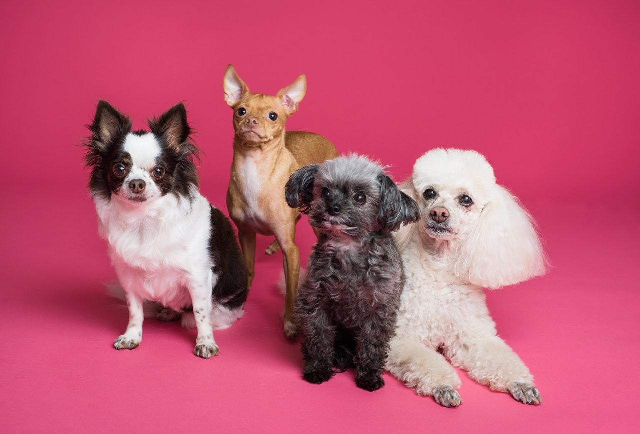 ¿Cómo reconoces el miedo y la inseguridad en los perros?